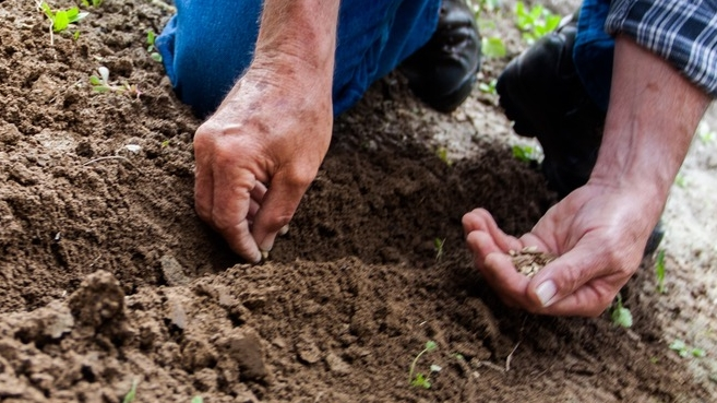 Tools of the Farmer's Trade: Their Hands